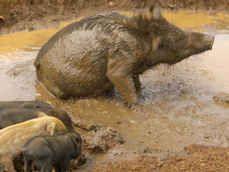 Adventure in Laos ZOA deel 12