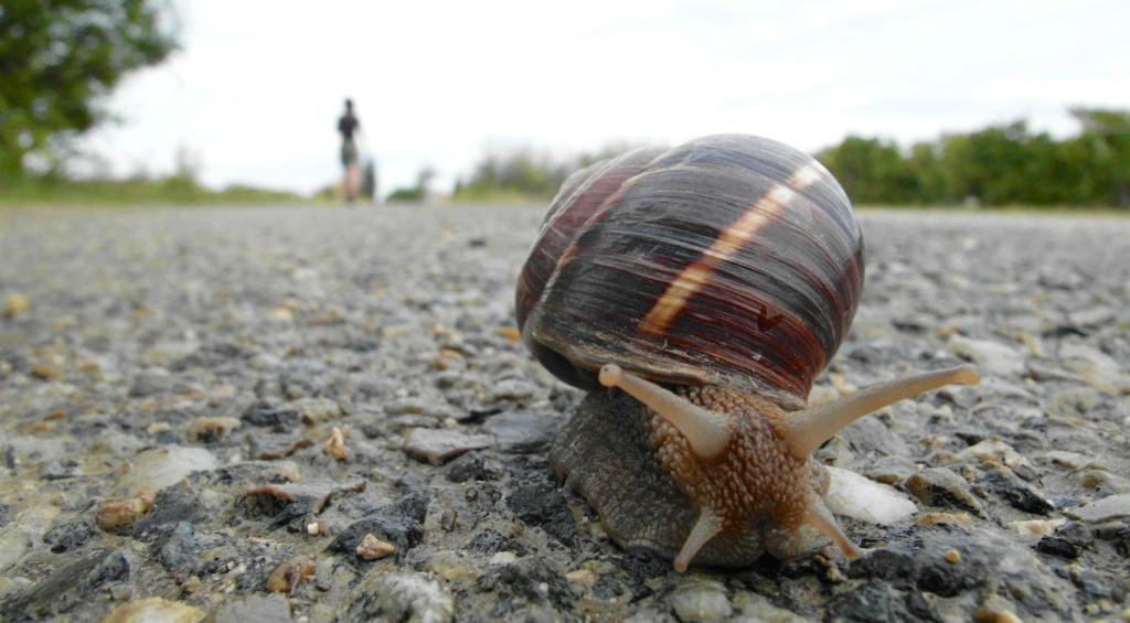 snail 007